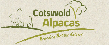 Cotswold Alpacas | Breeding Better Colours - Alpacas, Gloucestershire